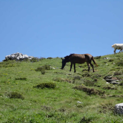 horses in Zagori and the National / Geopark of Vikos-Aoos