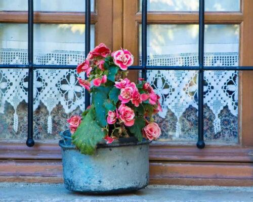 Το Εν Χώρα Βεζίτσα δεν είναι ένας ξενώνας με την κλασική έννοια. Αυτό το αρχοντικό σπίτι, σχεδιασμένο με Ζαγορία αισθητική και ευαισθησία βρίσκεται στο μεσοχώρι του χωριού της Βίτσας, μπροστά στην πλακόστρωτη πλατεία με τον υπεραιωνόβιο πλάτανο